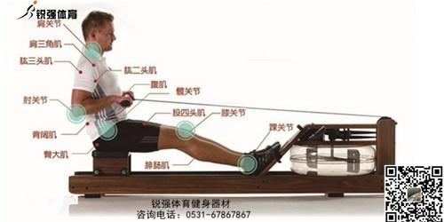 划船机和跑步机哪个锻炼更有效